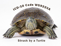 ICD-10 Code: Struck by Turtle