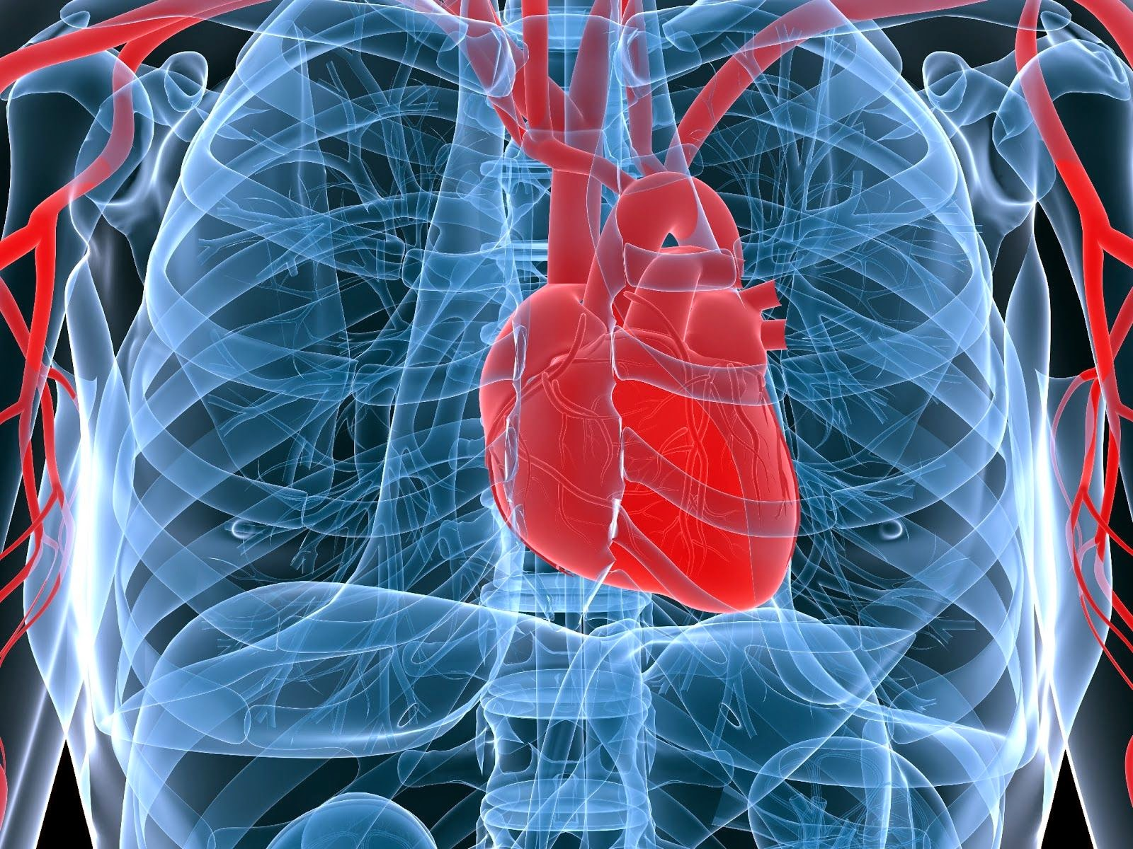 heart-biology-encryption-data